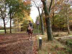 Natuurgebied Oirschotse heide Oirschotse Heide